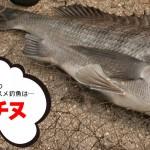 4月のオススメ釣魚は「チヌ」、「真鯛」、「渓流魚」!