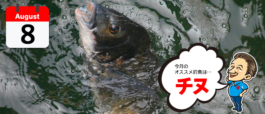 わたなべ オススメ釣魚「チヌ」