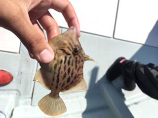 ひとつテンヤ真鯛