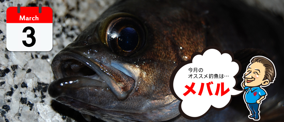 3月のオススメ釣魚「メバル」
