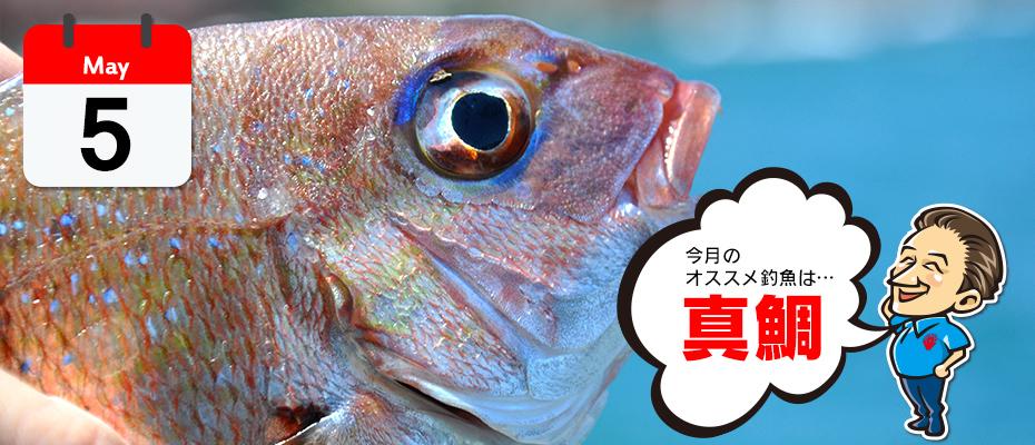 わたなべ オススメ釣魚「真鯛」