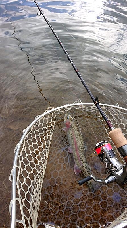 釣行レポート