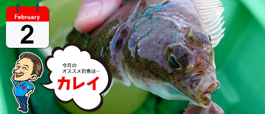 わたなべ オススメ釣魚「カレイ」