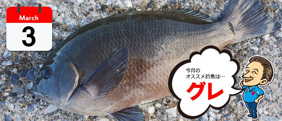 3月のオススメ釣魚「グレ」