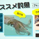 7月のオススメ釣魚は、シロギス、白イカ、ウナギ!