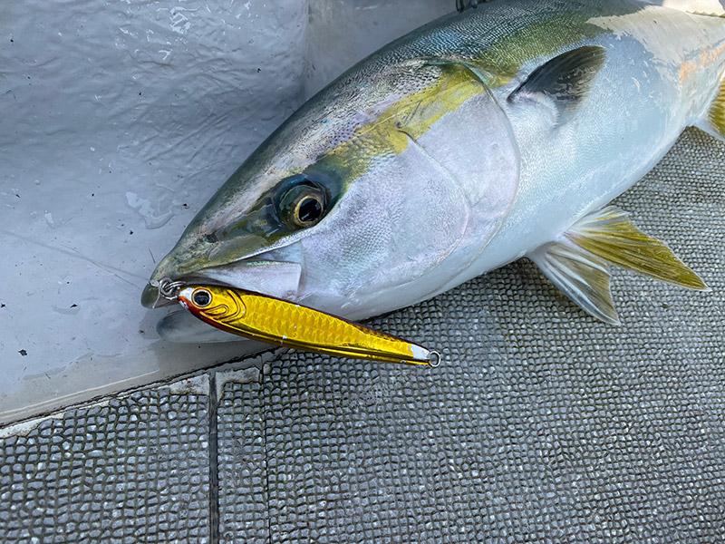わたなべ釣具スタッフ釣行「青物ジギング釣行」